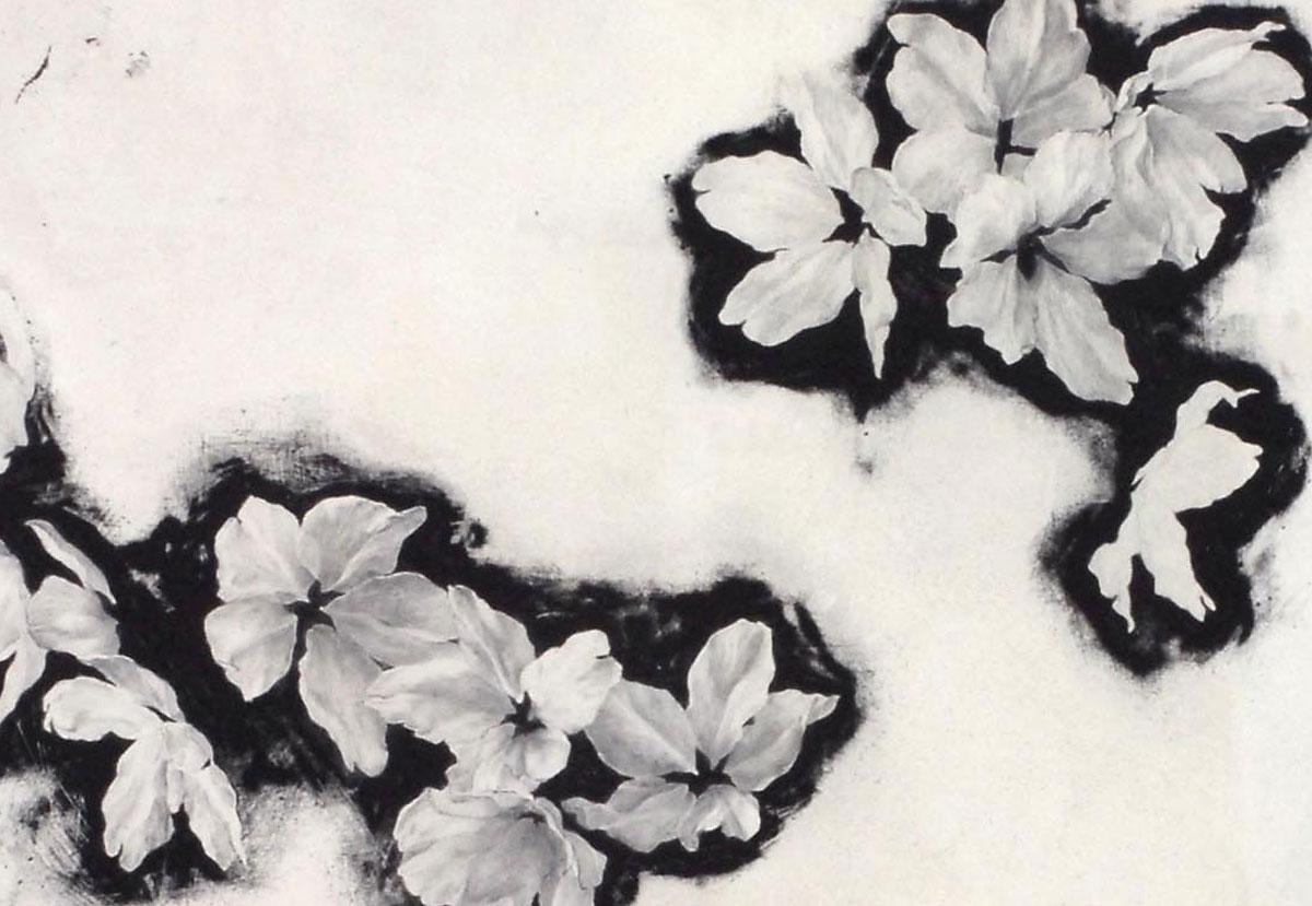 現代美術アーティスト・山本基が桜をモチーフに描いた細密な鉛筆ドローイング。